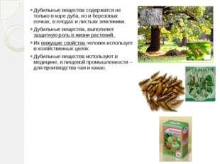 Дубильные вещества содержатся не только в коре дуба, но и березовых почках, в