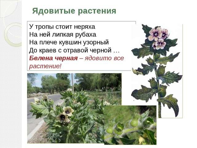 Ядовитые растения У тропы стоит неряха На ней липкая рубаха На плече кувшин у...