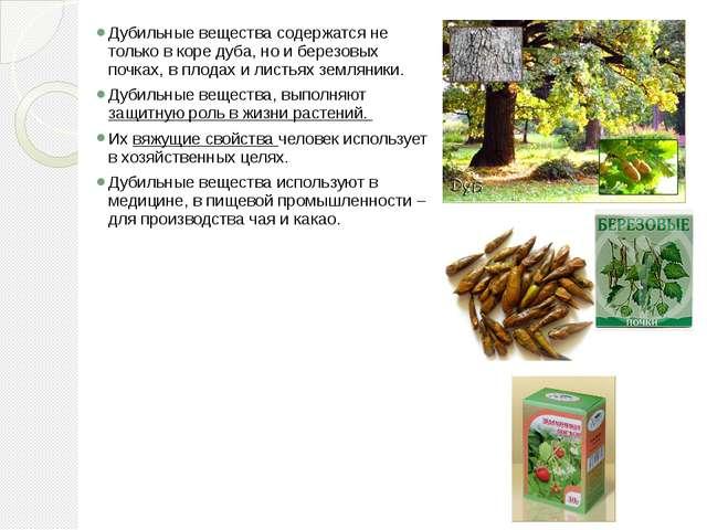 Дубильные вещества содержатся не только в коре дуба, но и березовых почках, в...