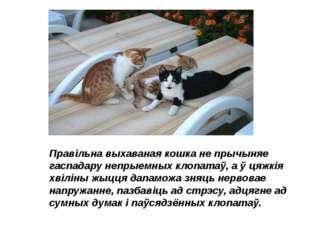 Правільна выхаваная кошка не прычыняе гаспадару непрыемных клопатаў, а ў цяжк