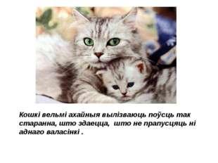 Кошкі вельмі ахайныя вылізваюць поўсць так старанна, што здаецца, што не прап
