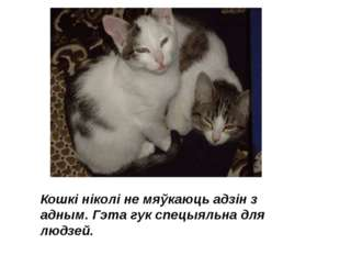 Кошкі ніколі не мяўкаюць адзін з адным. Гэта гук спецыяльна для людзей.