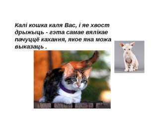 Калі кошка каля Вас, і яе хвост дрыжыць - гэта самае вялікае пачуццё кахання