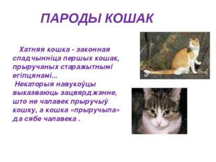 ПАРОДЫ КОШАК Хатняя кошка - законная спадчынніца першых кошак, прыручаных ста