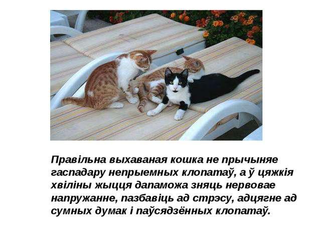 Правільна выхаваная кошка не прычыняе гаспадару непрыемных клопатаў, а ў цяжк...