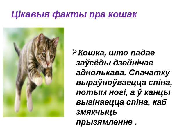 Цікавыя факты пра кошак Кошка, што падае заўсёды дзейнічае аднолькава. Спача...