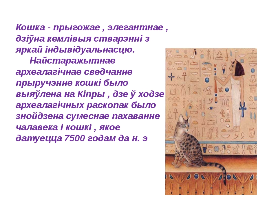Кошка - прыгожае , элегантнае , дзіўна кемлівыя стварэнні з яркай індывідуал...