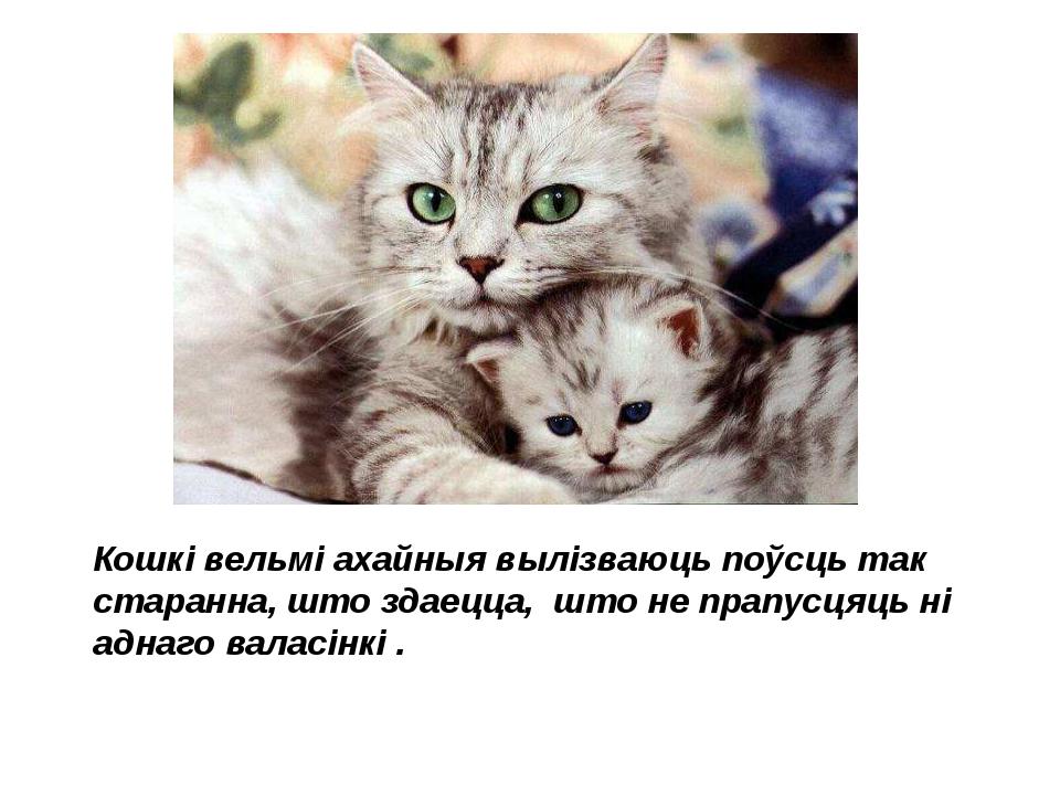 Кошкі вельмі ахайныя вылізваюць поўсць так старанна, што здаецца, што не прап...