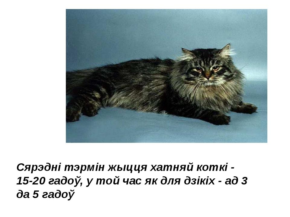 Сярэдні тэрмін жыцця хатняй коткі - 15-20 гадоў, у той час як для дзікіх - ад...