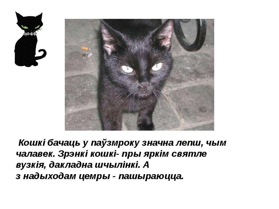 Кошкі бачаць у паўзмроку значна лепш, чым чалавек. Зрэнкі кошкі- пры яркім с...