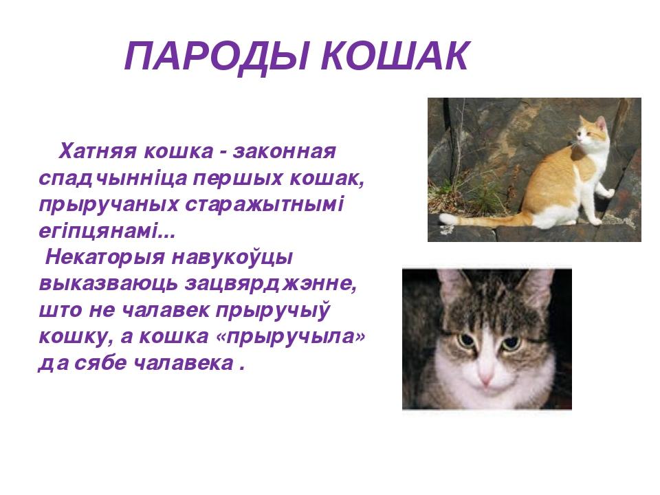 ПАРОДЫ КОШАК Хатняя кошка - законная спадчынніца першых кошак, прыручаных ста...