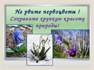 1 Не рвите первоцветы ! Сохраните хрупкую красоту природы!