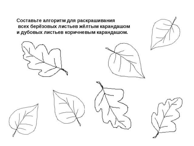 Составьте алгоритм для раскрашивания всех берёзовых листьев жёлтым карандашом...