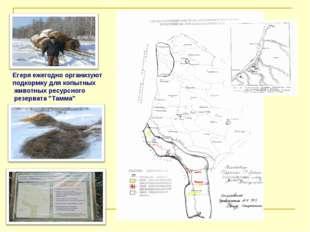 Егеря ежегодно организуют подкормку для копытных животных ресурсного резерват