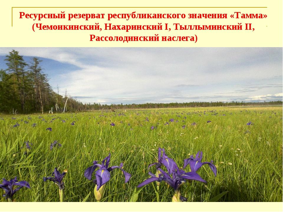 Ресурсный резерват республиканского значения «Тамма» (Чемоикинский, Нахаринск...