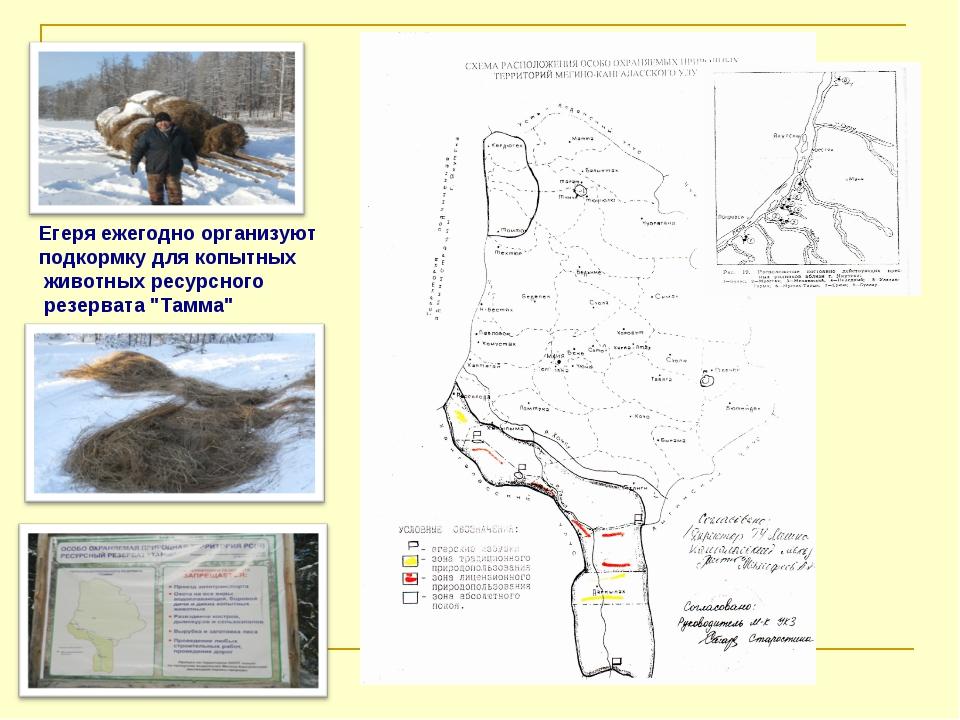 Егеря ежегодно организуют подкормку для копытных животных ресурсного резерват...