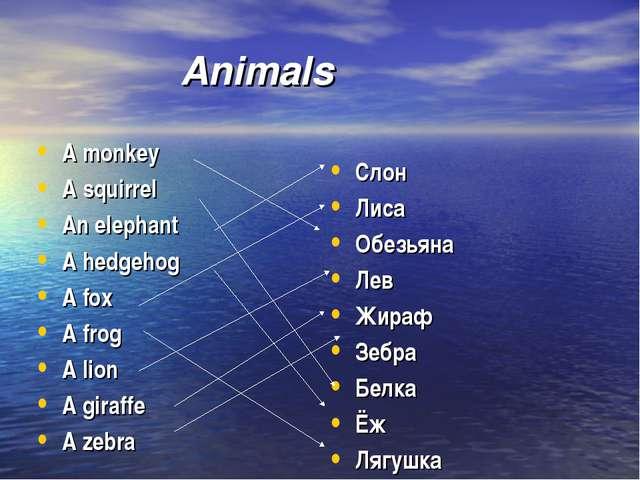 Animals A monkey A squirrel An elephant A hedgehog A fox A frog A lion A g...