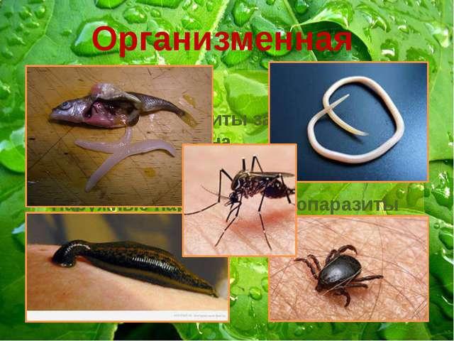 Организменная Животные-паразиты зависят от организма-хозяина Достаточно пищи...