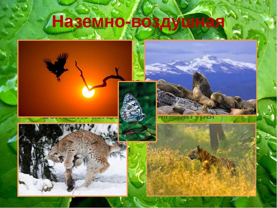 Наземно-воздушная Разреженная среда Различные климатические условия Большие к...
