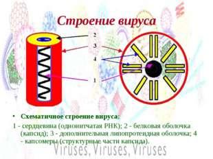 Строение вируса Схематичное строение вируса: 1 - сердцевина (однонитчатая РНК