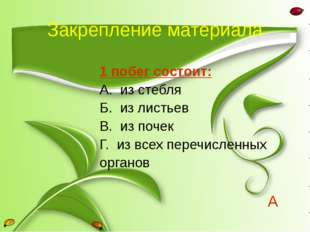 Закрепление материала 1 побег состоит: А. из стебля Б. из листьев В. из почек