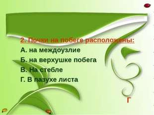 2. Почки на побеге расположены: А. на междоузлие Б. на верхушке побега В. На