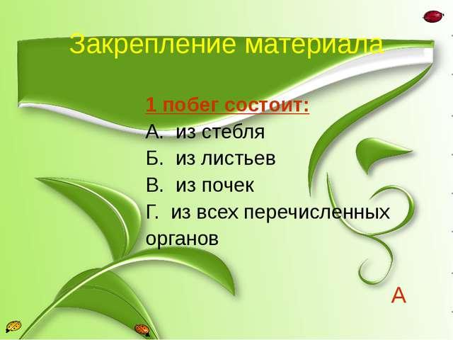 Закрепление материала 1 побег состоит: А. из стебля Б. из листьев В. из почек...