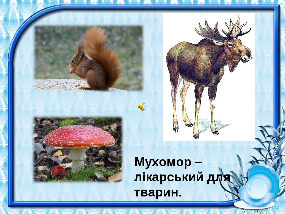 Мухомор – лікарський для тварин.
