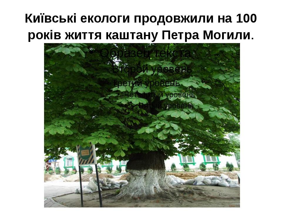 Київські екологи продовжили на 100 років життя каштану Петра Могили.