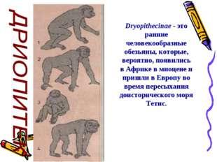 Dryopithecinae - это ранние человекообразные обезьяны, которые, вероятно, по