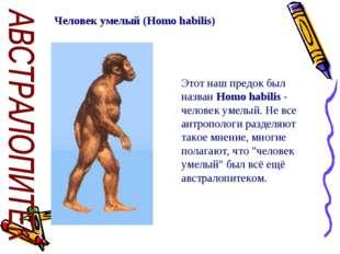 Человек умелый (Homo habilis) Этот наш предок был назван Homo habilis - челов