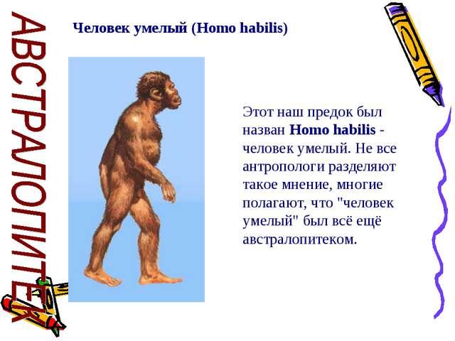 Человек умелый (Homo habilis) Этот наш предок был назван Homo habilis - челов...