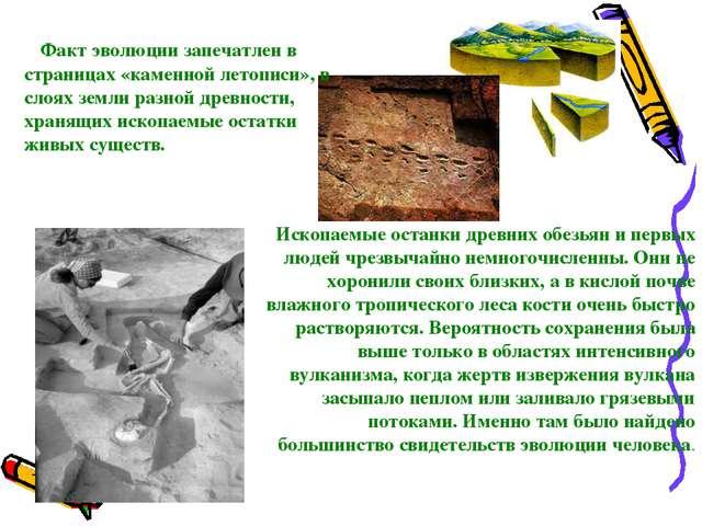Факт эволюции запечатлен в страницах «каменной летописи», в слоях земли разн...