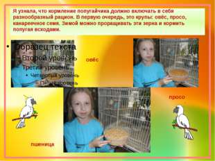 Я узнала, что кормление попугайчика должно включать в себя разнообразный раци