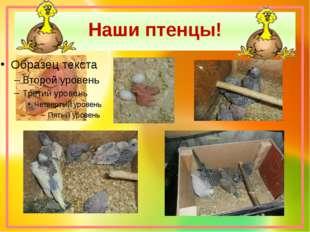 Наши птенцы!