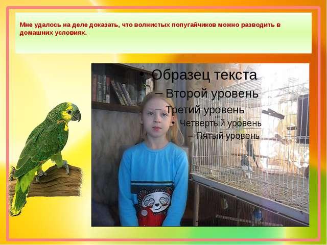 Мне удалось на деле доказать, что волнистых попугайчиков можно разводить в д...