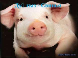 Дуңгыз - Свинья