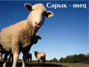 Сарык - овец