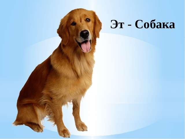 Эт - Собака
