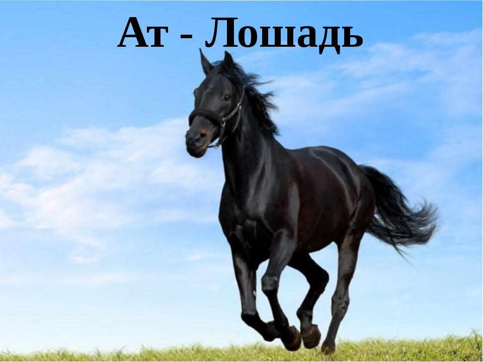 Ат - Лошадь