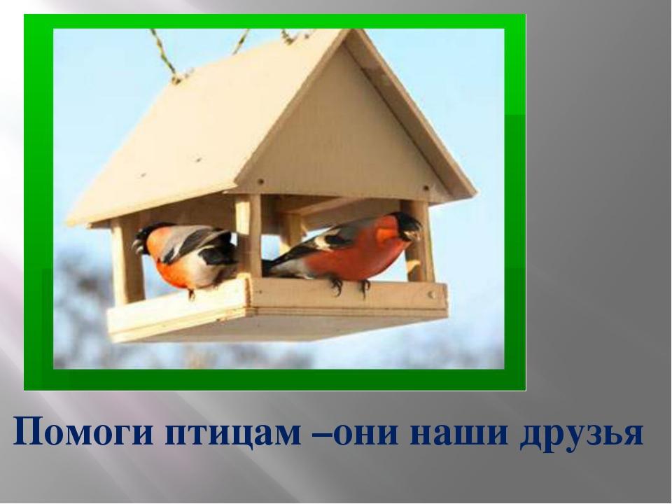 Помоги птицам –они наши друзья