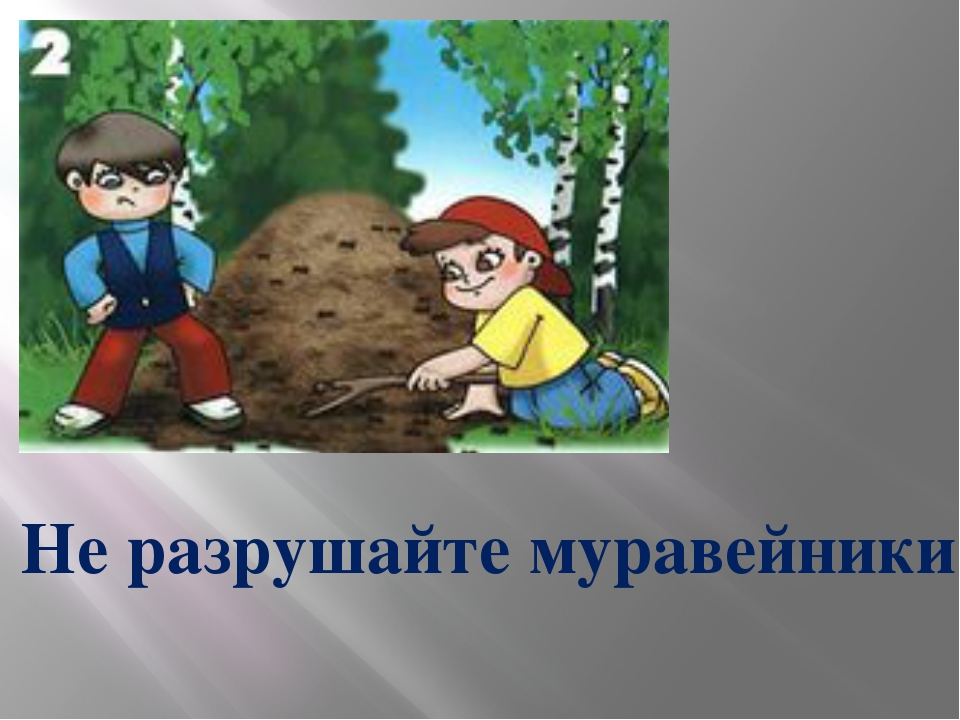 Не разрушайте муравейники