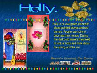 Holly is an evergreen plant with sharp-pointed leaves and red berries. Peopl