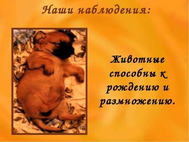 Наши наблюдения: Животные способны к рождению и размножению.