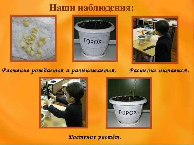Наши наблюдения: Растение рождается и размножается. Растение питается. Растен...