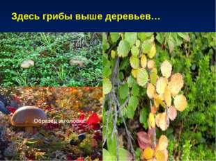 Здесь грибы выше деревьев…