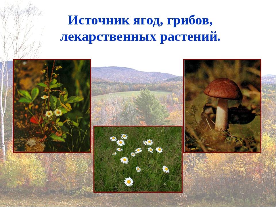 Источник ягод, грибов, лекарственных растений.