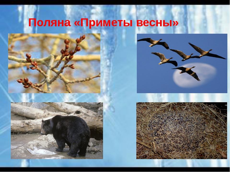 Поляна «Приметы весны»