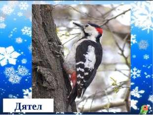 Чернокрылый, красногрудый, И зимой найдет приют: Не боится он простуды, С пер