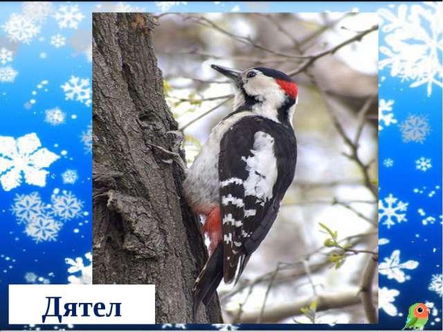 Чернокрылый, красногрудый, И зимой найдет приют: Не боится он простуды, С пер...